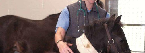 Утверждены новые ветеринарные правила