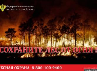 В лесах Саратовской области продолжается пожароопасный сезон