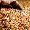 Управление Россельхознадзора по Саратовской области проконтролировало экспорт более 600 тысяч тонн зерна и продуктов его переработки