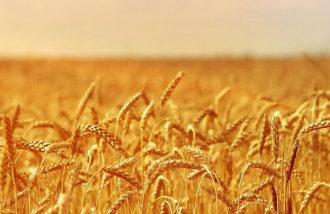 Саратовская область закрепилась в 10-ке регионов страны, имеющих наиболее высокие показатели обеспеченности сельхозпродукцией и продовольствием собственного производства