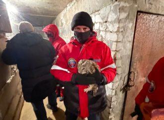 Саратовские спасатели помогли попавшей в погребе сове