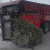 Регоператор обеспечит вывоз праздничных елок с контейнерных площадок