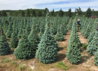 Саратов планирует сотрудничать с лесопитомником в Новых Бурасах