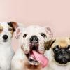 Кинологи рассказали,как подобрать породу собаки