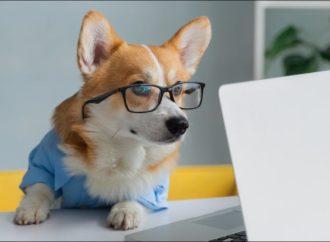 Лучший помощник: какие профессии может освоить собака